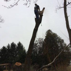 Johnson City Tree Removal